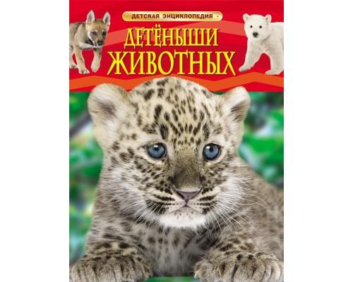 Детеныши животных Детская энциклопедия Росмэн